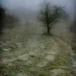 Winter Path, photograph, Bernie Kubiak
