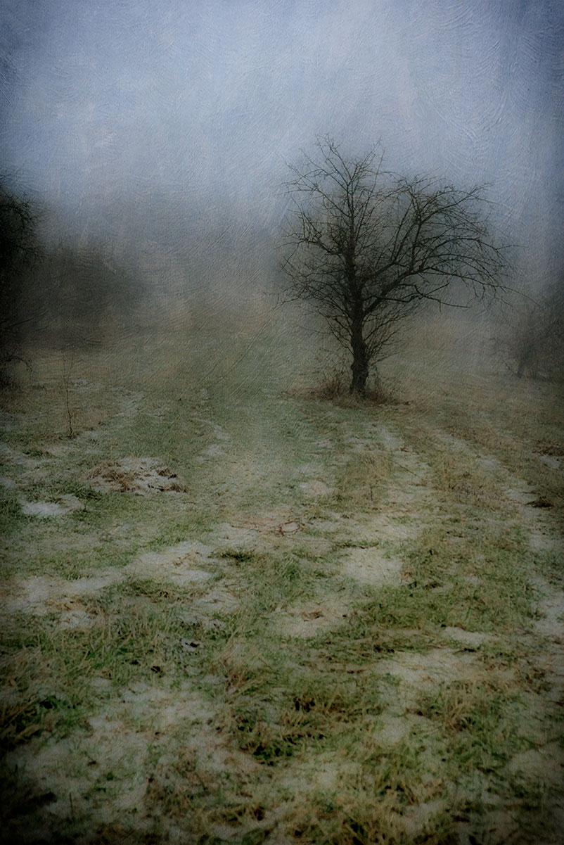 Winter Path, photograph, Bernie Kubiak